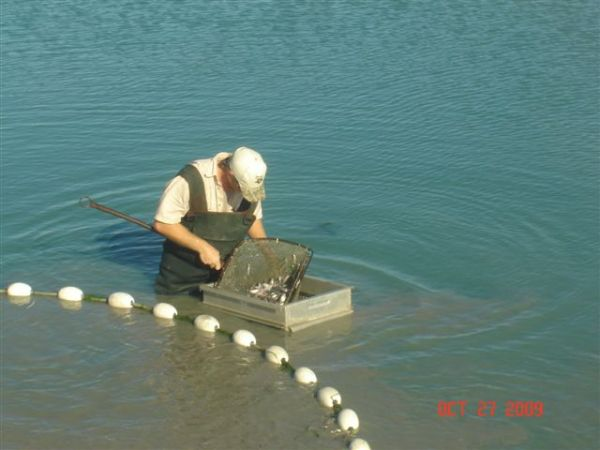 Pond Aeration Systems And Lake Fountains Herrmann 39 S Fish Farm
